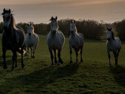 Témoignage – travail sur les chevaux de Elke